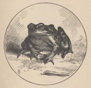 Знаменитата скачаща жаба от окръг Калаверас