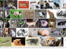naomi-kritzer-cat-pictures-please-short-story-bulgarian-translation