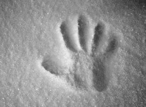 Снимка на отпечатък от длан в снега