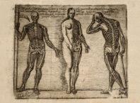 Илюстрация с три скелета