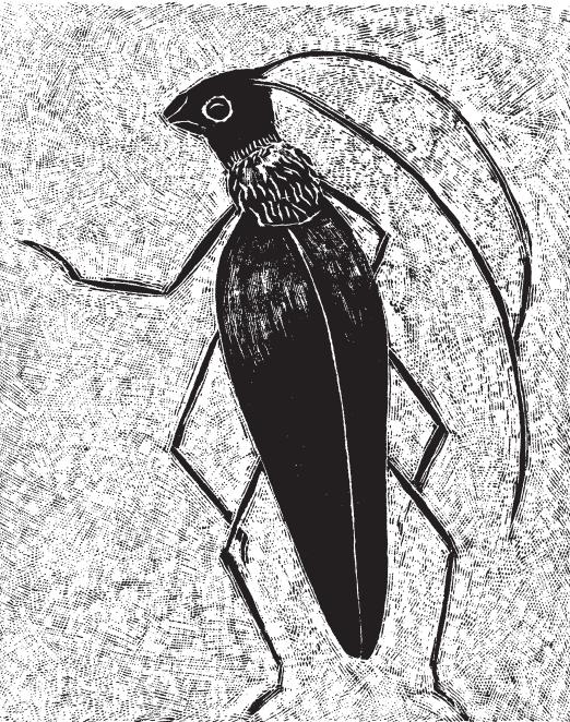 Поляната и нектарните шарки, Първо писмо, илюстрация: Инари Крун