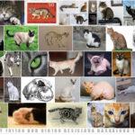 """""""Котешки снимки, моля"""" от Наоми Крицър (разказ)"""